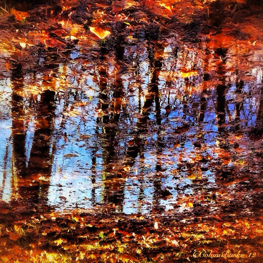 November Swansong... Reflections in Corkagh Park, Clondalkin