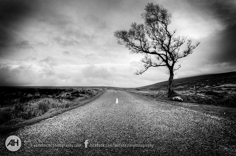 Aoife Hester_Lonely Tree Sally Gap Co Wicklow