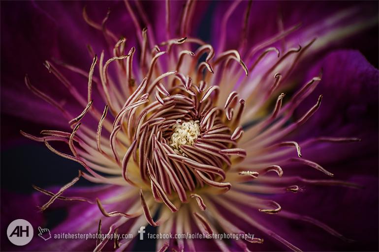 Aoife Hester_Macro Flower