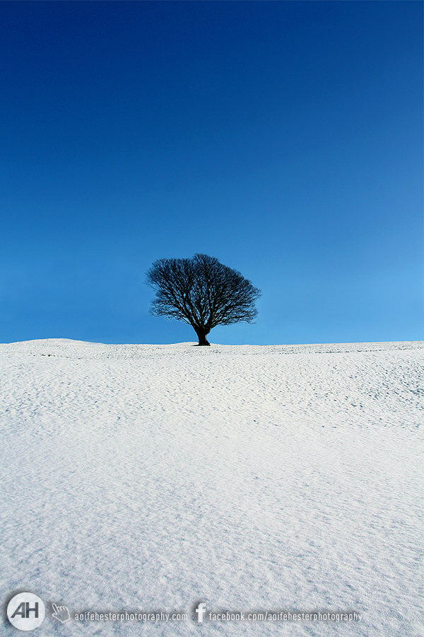 Aoife Hester_Snow Tree